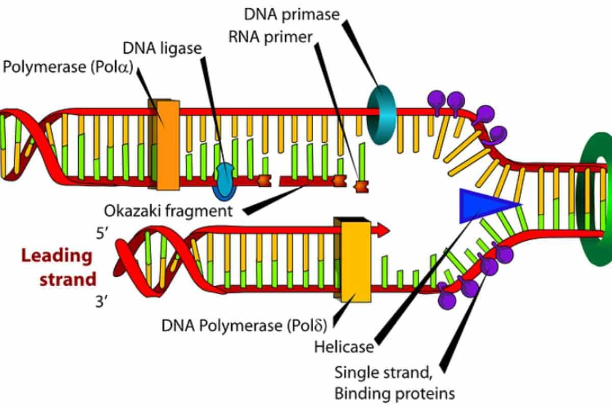 Xét nghiệm ADN huyết thống